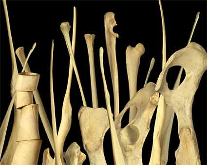 Bone Forest by R. Wayne Parsons. Source: sohophoto.com