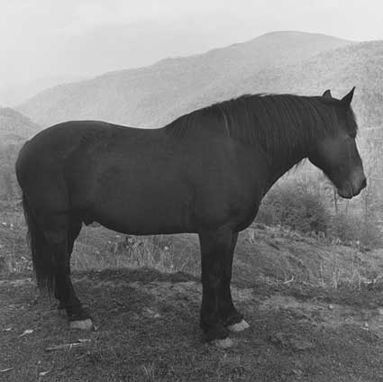 Horse West Virginia by Peter Hujar. Source: pacemacgill.com